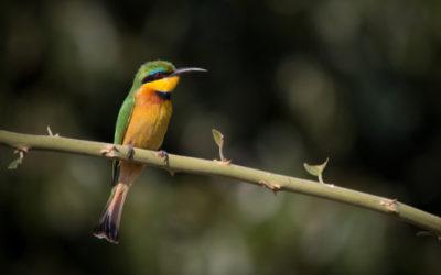 Uccelli: animali meravigliosi che popolano ogni angolo del Pianeta