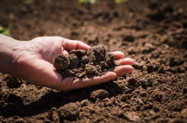 Quali sono i diversi tipi di terreno e a quali piante o coltivazioni si prestano?