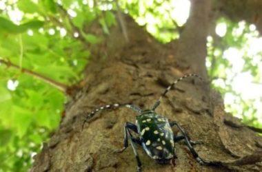 Come prevenire e disinfestare i tarli del legno, insetti in grado di distruggere mobili e strutture in legno