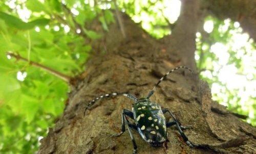 Photo of Come prevenire e disinfestare i tarli del legno, insetti in grado di distruggere mobili e strutture in legno