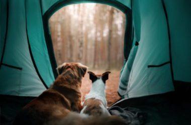 Tende da campeggio: guida alla scelta per il camping in famiglia o l'escursionismo