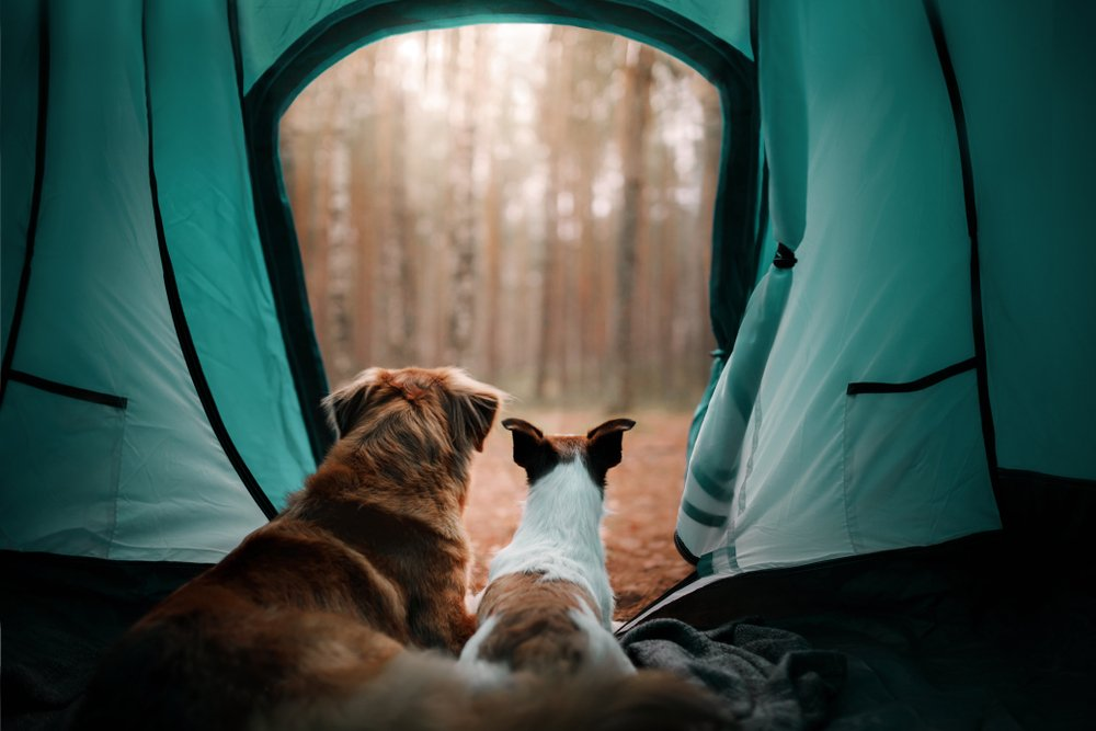 Photo of Tende da campeggio: guida alla scelta per il camping in famiglia o l'escursionismo