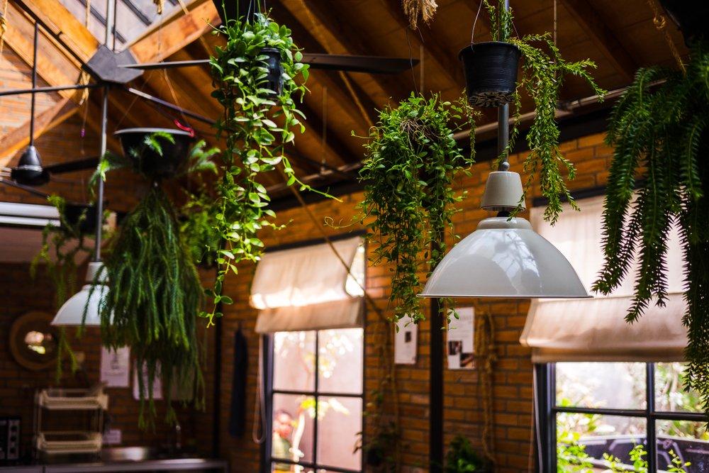 piante ricadenti