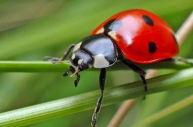Insetti: tutto quello che c'è da sapere su questi piccoli animaletti