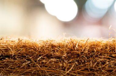Fibra di cocco: dalla noce di cocco, una fibra vegetale per eco-tessuti e non solo
