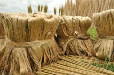 Scopriamo la iuta, una fibra vegetale usata per confezionare i sacchi, economica ed ecosostenibile