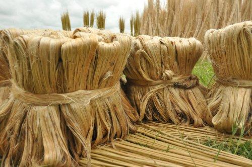 Photo of Scopriamo la iuta, una fibra vegetale usata per confezionare i sacchi, economica ed ecosostenibile