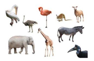 Animali erbivori: quali sono… impariamo a conoscerli