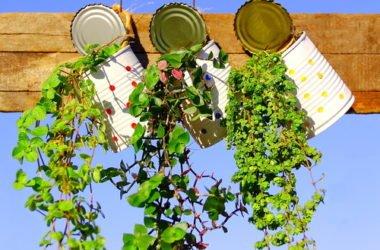 Le migliori piante ricadenti per ogni ambiente e clima: la guida facile