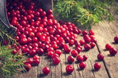Cranberry, il mirtillo rosso d'America ideale per combattere la cistite