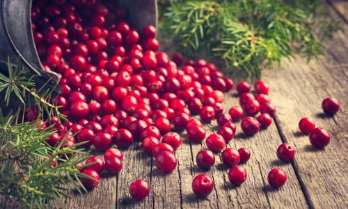 Photo of Cranberry, il mirtillo rosso d'America ideale per combattere la cistite