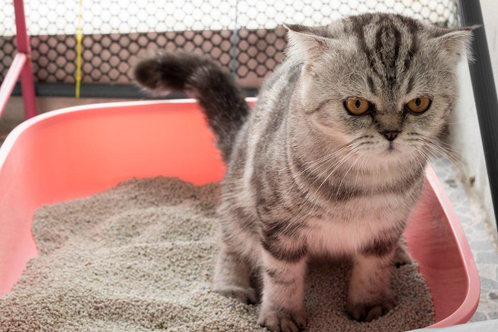 Photo of Tutti i segreti e le dritte giuste per abituare il gatto alla lettiera e a non sporcare in giro