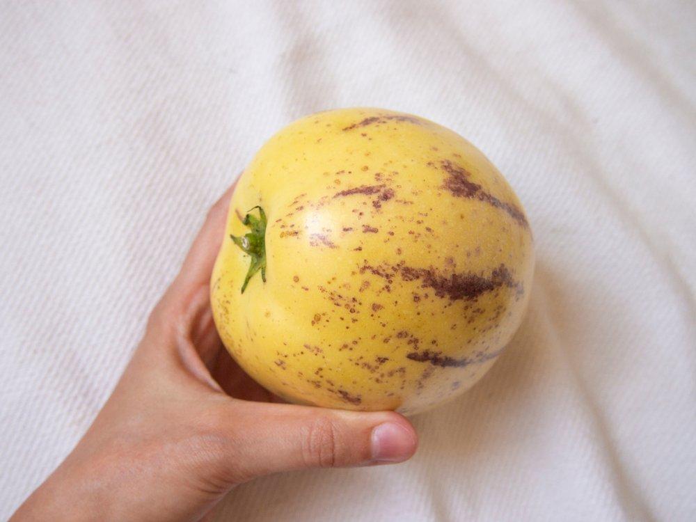Photo of Pepino: alla scoperta di questa solanacea che produce frutti dalle notevoli proprietà nutrizionali