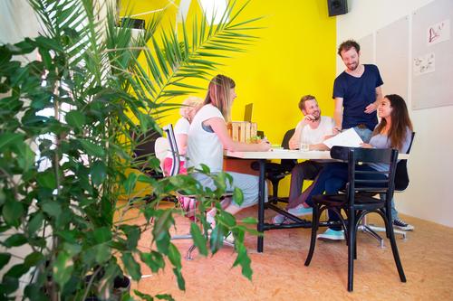 Piante da ufficio: come scegliere quella più adatta al proprio ambiente di lavoro