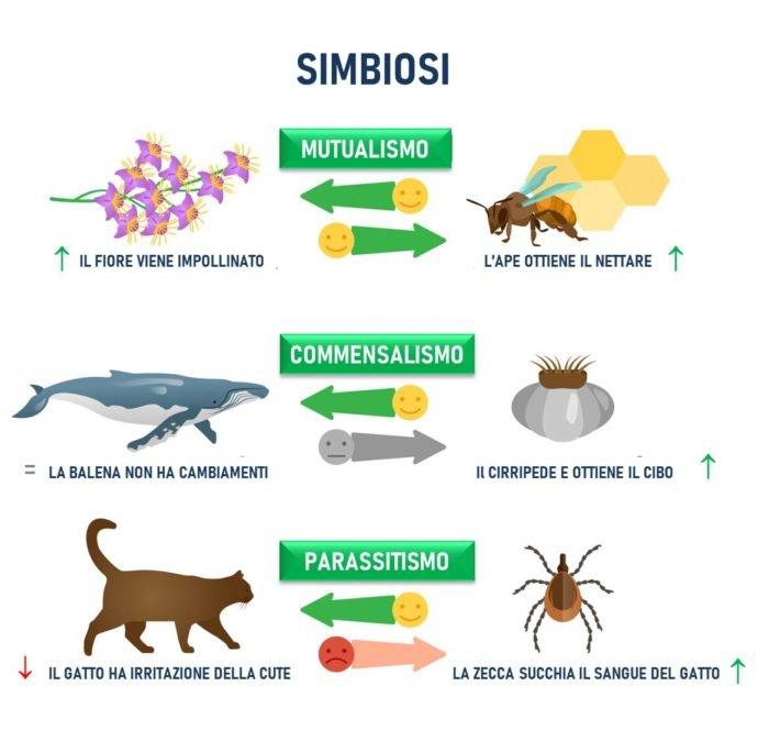 simbiosi