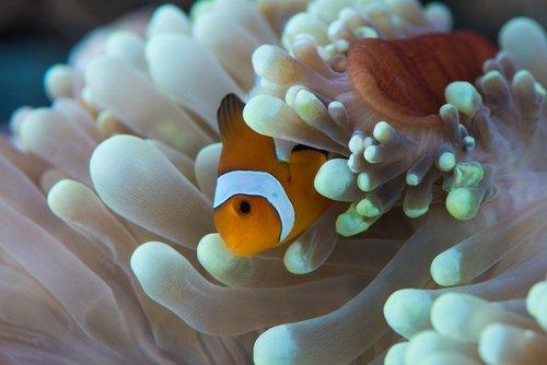 Photo of In Natura è un rapporto vantaggioso, alla pari o di sfruttamento: la simbiosi esiste sia tra gli animali che le piante
