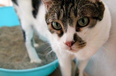 Tutti i segreti e le dritte giuste per abituare il gatto alla lettiera e a non sporcare in giro