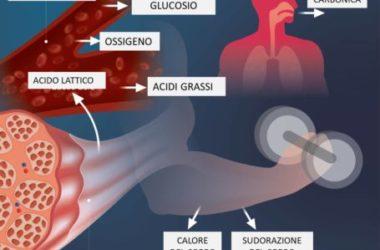 Dopo l'allenamento intenso, si accumula l'acido lattico, che provoca dolore muscolare: come prevenirlo?