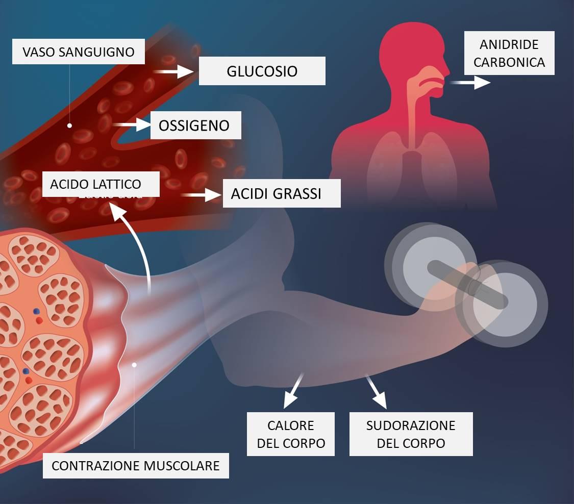 Photo of Dopo l'allenamento intenso, si accumula l'acido lattico, che provoca dolore muscolare: come prevenirlo?