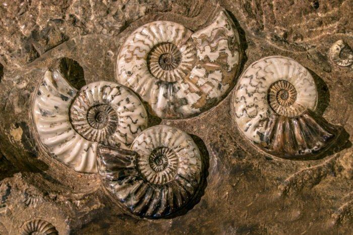fossili