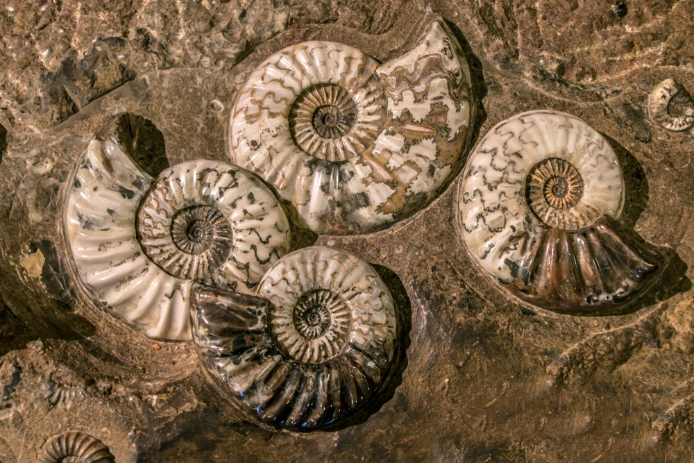 Photo of Breve guida a i fossili, per scoprire l'evoluzione della vita sulla Terra