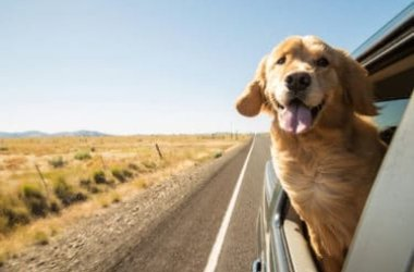 Il Golden Retriever è uno dei cani più popolari al mondo, amatissimo dai bambini e non solo