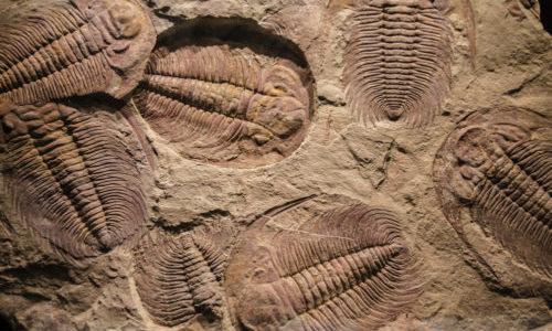 Breve guida a i fossili, per scoprire l'evoluzione della vita sulla Terra