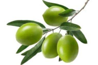 Impariamo insieme a riconoscere un olio di oliva di qualità
