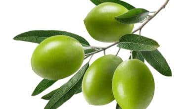 Photo of Impariamo insieme a riconoscere un olio di oliva di qualità