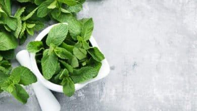 Photo of Menta: proprietà e ricette da provare in cucina