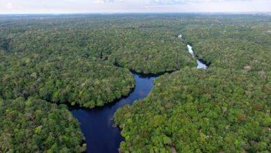 Photo of Amazzonia, polmone della Terra, se scompare non c'è più futuro