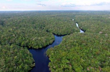 Amazzonia, polmone della Terra, se scompare non c'è più futuro