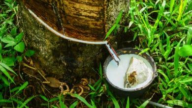 Photo of Cos'è il lattice naturale, in quali prodotti si usa e quali differenze presenta rispetto a quello sintetico