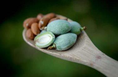Mandorle amare: una varietà di mandorle potenzialmente tossiche, da conoscere e usare con cautela