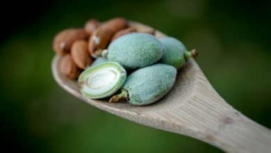 Photo of Mandorle amare: una varietà di mandorle potenzialmente tossiche, da conoscere e usare con cautela