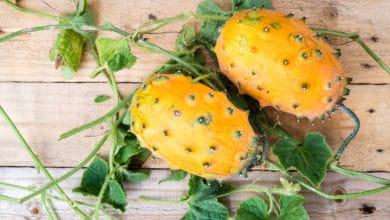 Photo of Tutto sul kiwano, un curioso frutto esotico dalle proprietà energizzanti e antiossidanti