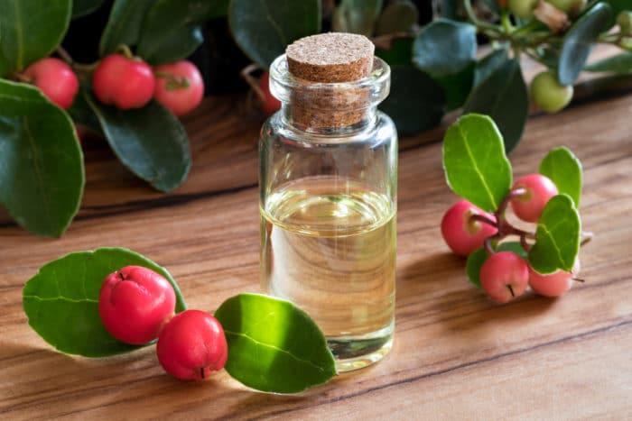 gaultheria olio essenziale