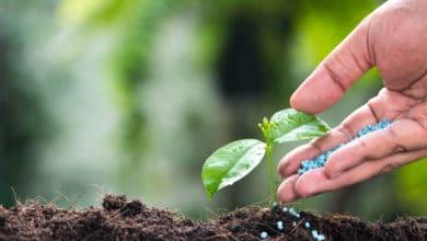 Photo of Fertilizzante: tipologie, dosi e modalità di utilizzo