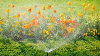 Photo of I diversi sistemi di irrigazione del giardino e delle piante di casa: la guida pratica