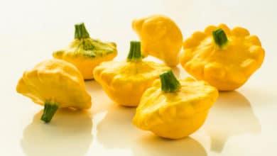 Photo of Scopriamo la zucchina patisson, una varietà diversa piccola, a disco piatto, dal sapore tra zucca e cetriolo