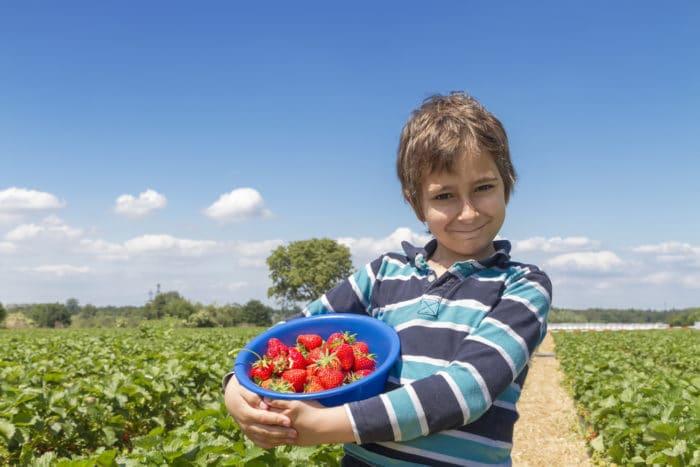 Autoraccolta di frutta