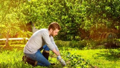 Photo of Diradamento, un'operazione utile a preservare la crescita rigogliosa di piante e verdure