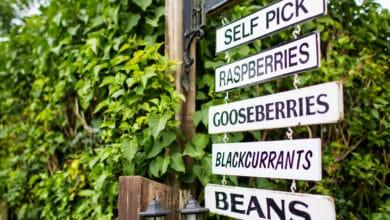 Photo of Autoraccolta di frutta, verdura e fiori piace a coltivatori e consumatori