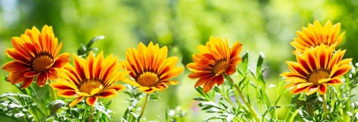 fiori estivi