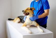 Photo of Rabbia, perché la malattia dei cani può attaccare anche l'uomo