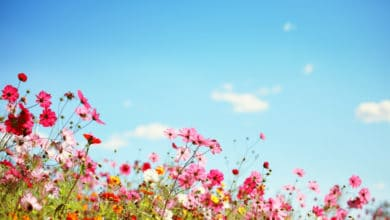 Photo of Fiori estivi: guida alla scelta