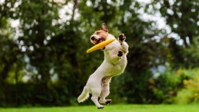 Photo of Parco giochi per cani: quali sono le strutture in Italia?