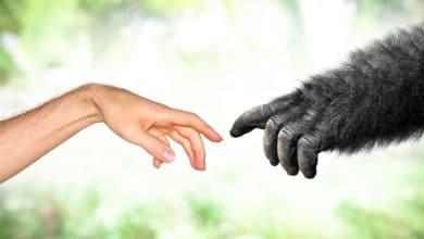 Photo of Conosciamo le scimmie e i tanti punti di contatto con gli esseri umani