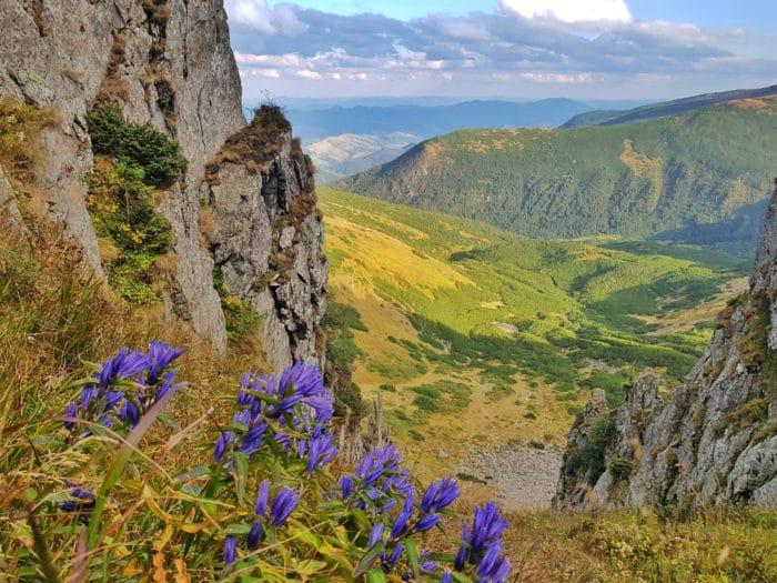 fiori di montagna genziana