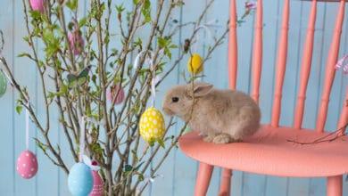 Photo of Tutto sull'albero di Pasqua, la bellissima decorazione primaverile che proviene dal Nord Europa